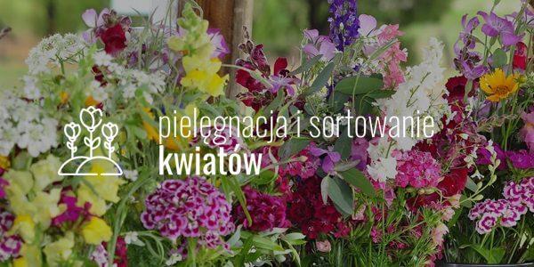 Pielęgnacja i sortowanie kwiatów
