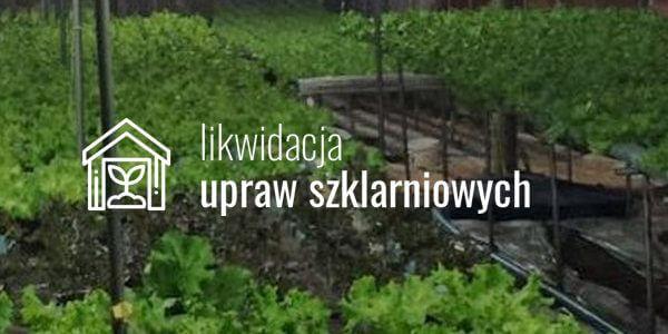Likwidacja upraw szklarniowych