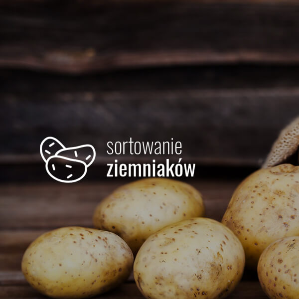 sortowanie ziemniaków