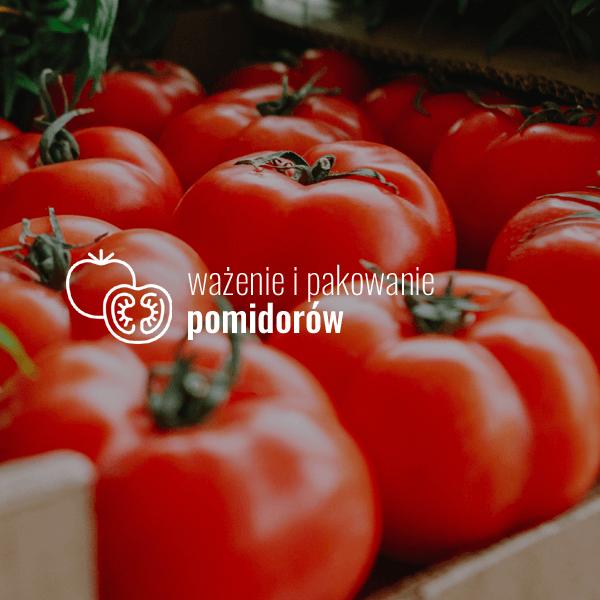 ważenie i pakowanie pomidorów