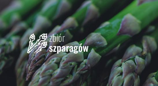 zbiór szparagów