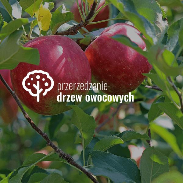 Przerzedzanie drzew owocowych