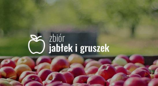 Zbiór jabłek i gruszek