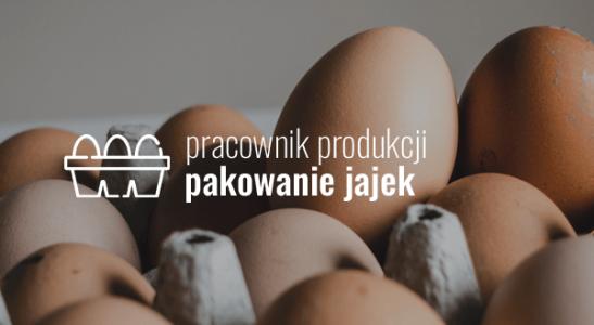 Pracownik produkcji – pakowanie jajek