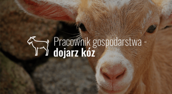 Pracownik gospodarstwa – dojarz kóz