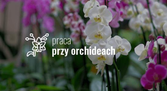 Praca przy orchideach