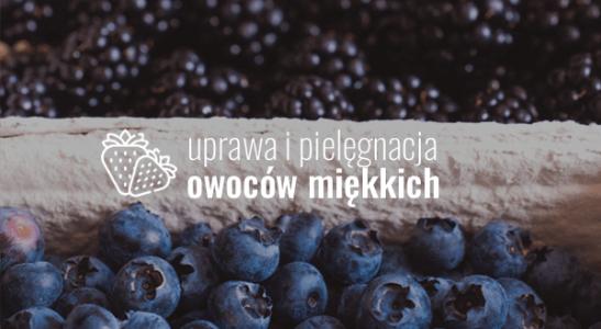 Uprawa owoców miękkich